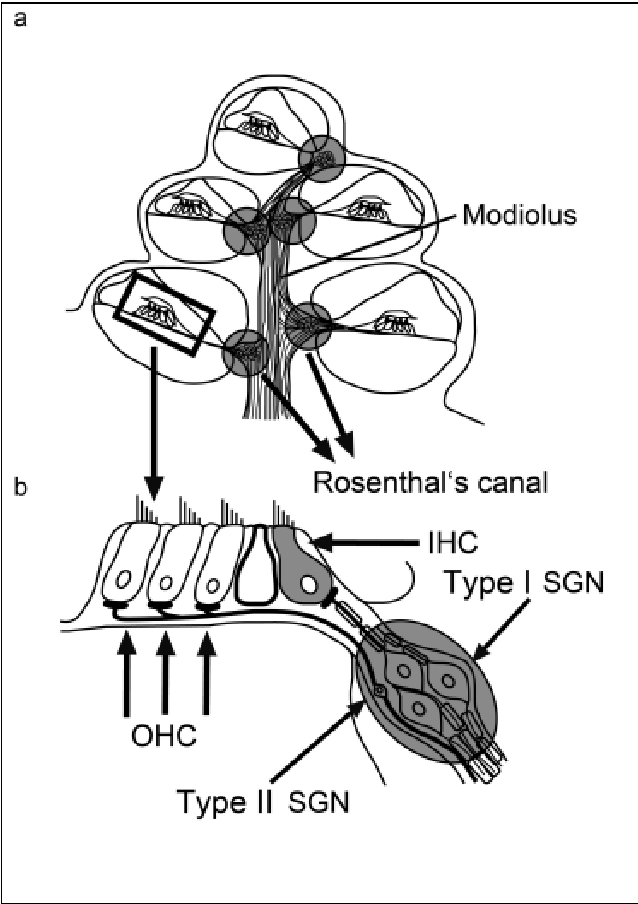 Figure 2 From Molecular Biology Of Hearing