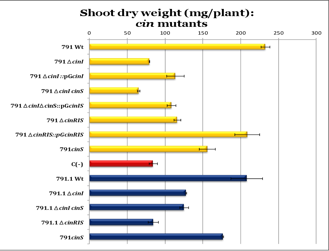 Figure 41. Effect of the mutation of cin genes on shoot dry weight accumulation. Data correspond to 21-day old pea plants inoculated with the indicated cin mutants derived either from Rlv UPM791 (yellow bars) or from UPM791.1 strain (blue bars). Red bar correspond to uninoculated control plants.
