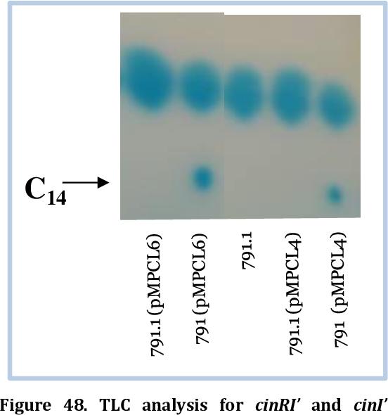 Figure 48. TLC analysis for cinRI' and cinI' fusions.