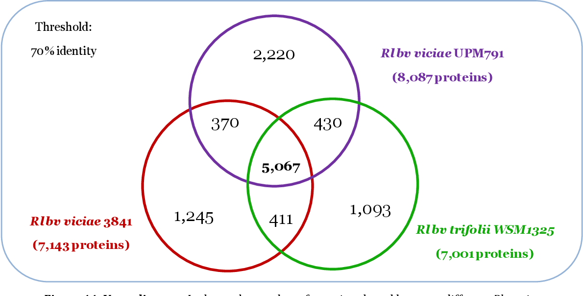 Figure 11. Venn diagram. It shows the number of proteins shared between different Rl strains sequenced and Rlv UPM791