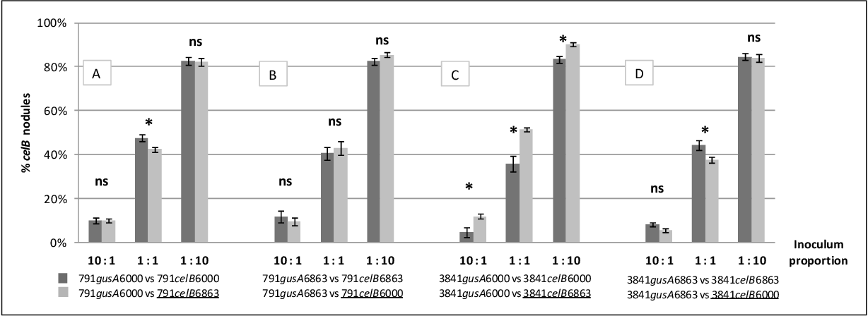 """Figure. 23. Analysis of the effect of quorum quenching on intra-strain competitiveness. Bars show the percentage of nodules resulting from celB-carrying strains compared to the total of nodules produced in each assay. Inocula mixtures were made at the indicated ratios. """"ns"""" means no statistically significant difference between the strains being tested (P > 0.05), while """"*"""" means significant difference according to Bonferroni's test (P < 0.05). ANOVA P-values for each interaction are <0.01 , 0.017 and <0.01 in A; <0.01 , <0.01 and <0.01 in B, 0.011, 0.024 and 0.0055 in C; <0.01 , 0.0365 and <0.01 in D. Error bars represent standard errors of the mean."""