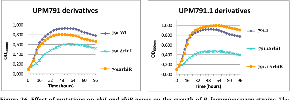 Figure 26. Effect of mutations on rhiI and rhiR genes on the growth of R. leguminosarum strains. The indicated strains were grown in TY liquid media in a Bioscreen device. Values are the average of three replicates.