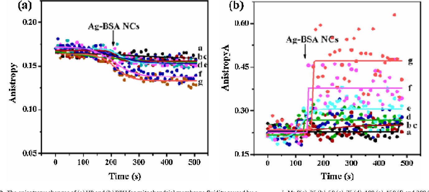 Fig. 3. The anisotropy changes of (a) HP and (b) DPH for mitochondrial membrane fluidit