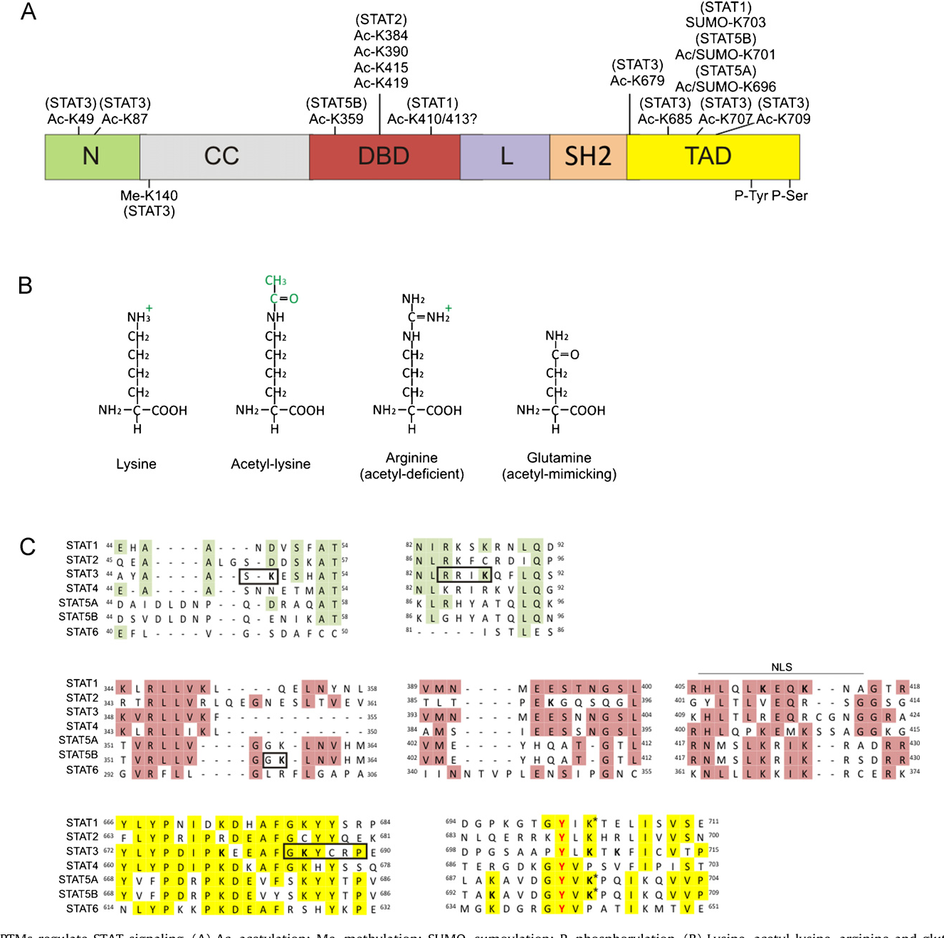 Figure 1 from The HAT/HDAC interplay: multilevel control of