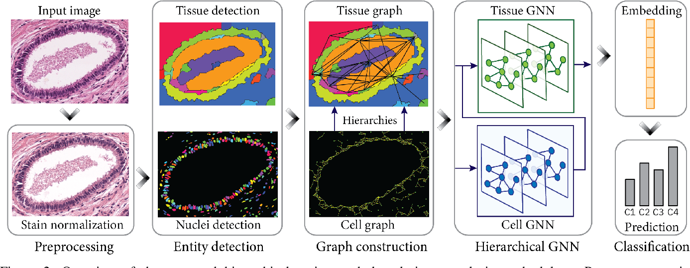 Figure 2 for Hierarchical Graph Representations in Digital Pathology