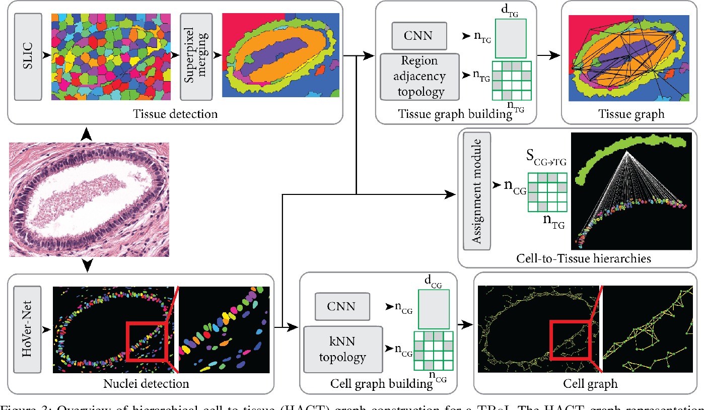 Figure 3 for Hierarchical Graph Representations in Digital Pathology