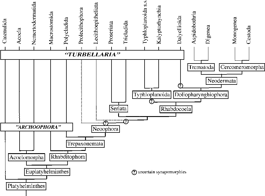Figure 3 From Global Diversity Of Free Living Flatworms