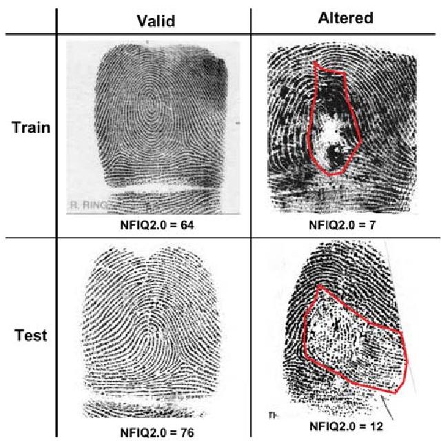 Figure 3 for Altered Fingerprints: Detection and Localization