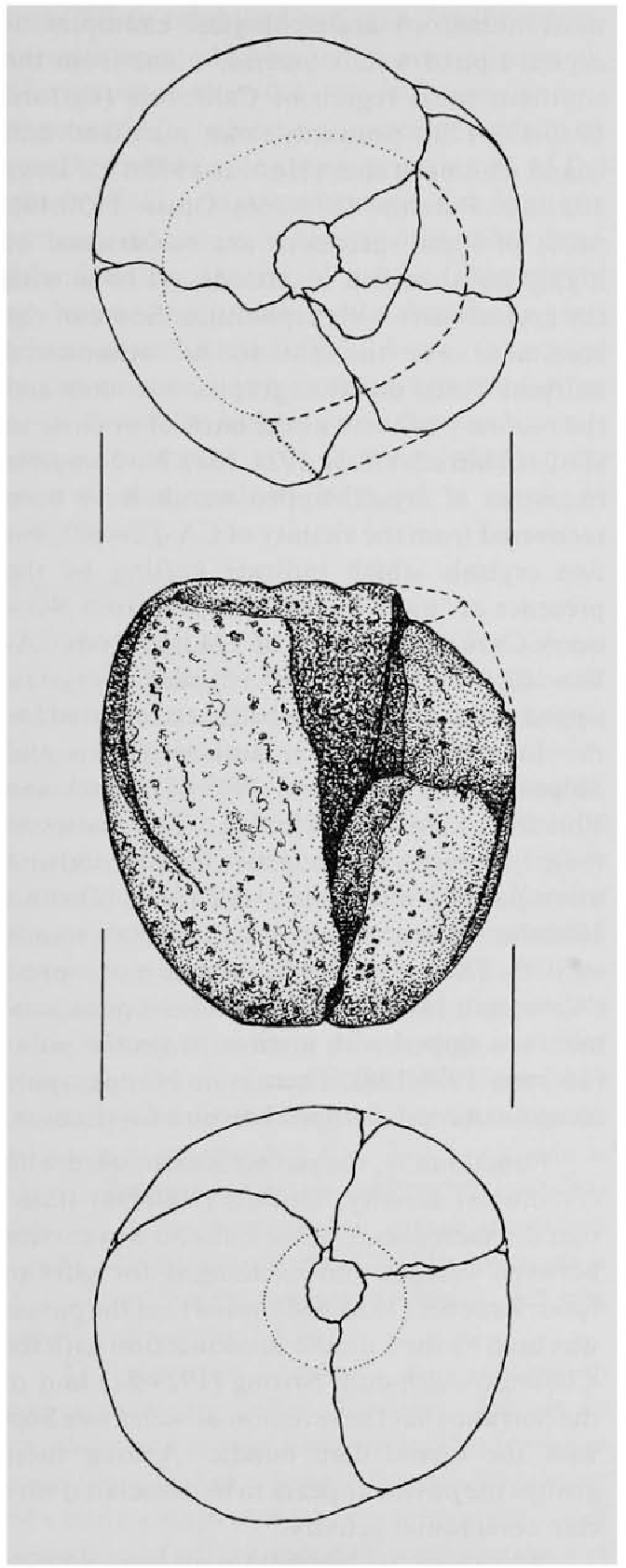 Figure 1 from A possible shamans's cache from CA-RIV-102
