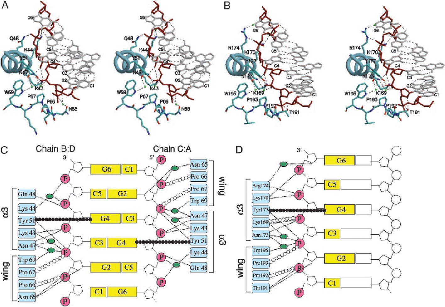 A poxvirus protein forms a complex with left handed z dna crystal figure 3 ccuart Choice Image