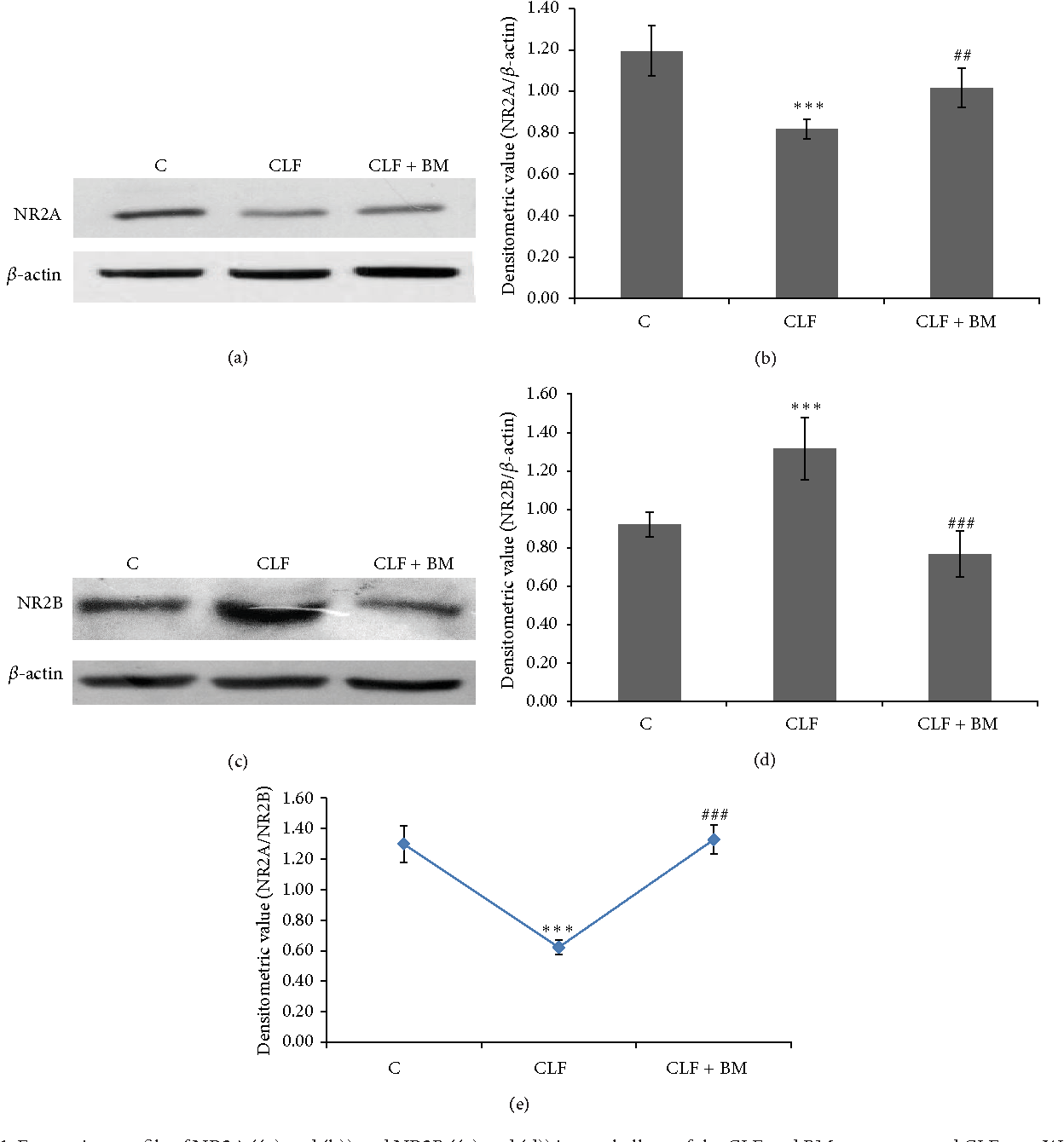 Figure 1 from Bacopa monnieri Extract (CDRI-08) Modulates the NMDA Receptor  Subunits and nNOS-Apoptosis Axis in Cerebellum of Hepatic Encephalopathy  Rats ...