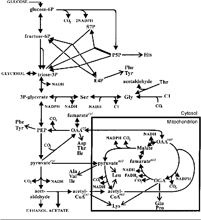 Figure 1 From Tca Cycle Activity In Saccharomyces Cerevisiae Is A