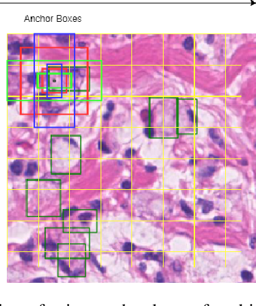 Figure 2 for SRPN: similarity-based region proposal networks for nuclei and cells detection in histology images