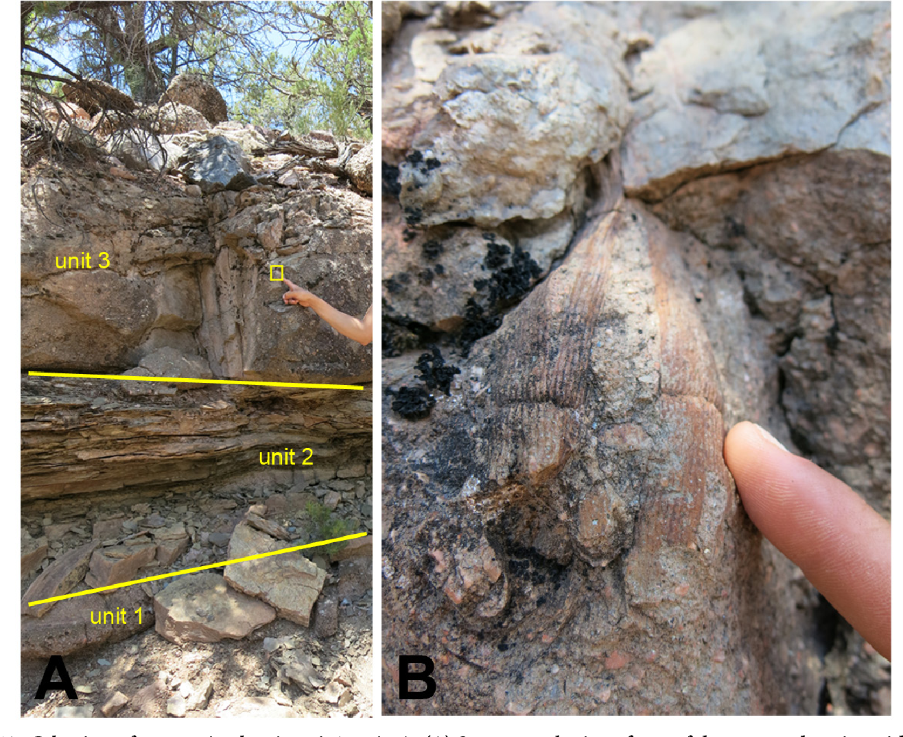 Figure 13 from Stratigraphy and Fossil Plants from the