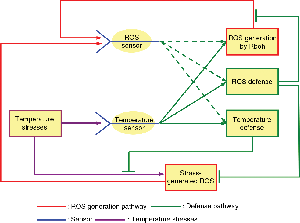 Reactive oxygen species and temperature stresses: A delicate balance
