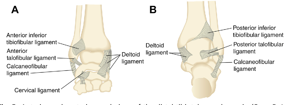 Figure 5 from Ankle sprains and instability. - Semantic Scholar