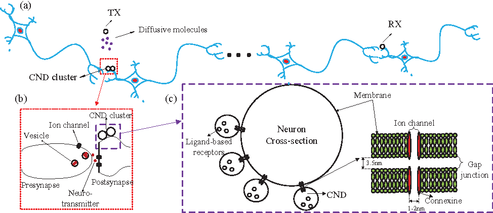 A diffusion neuron hybrid system for molecular communication figure 1 ccuart