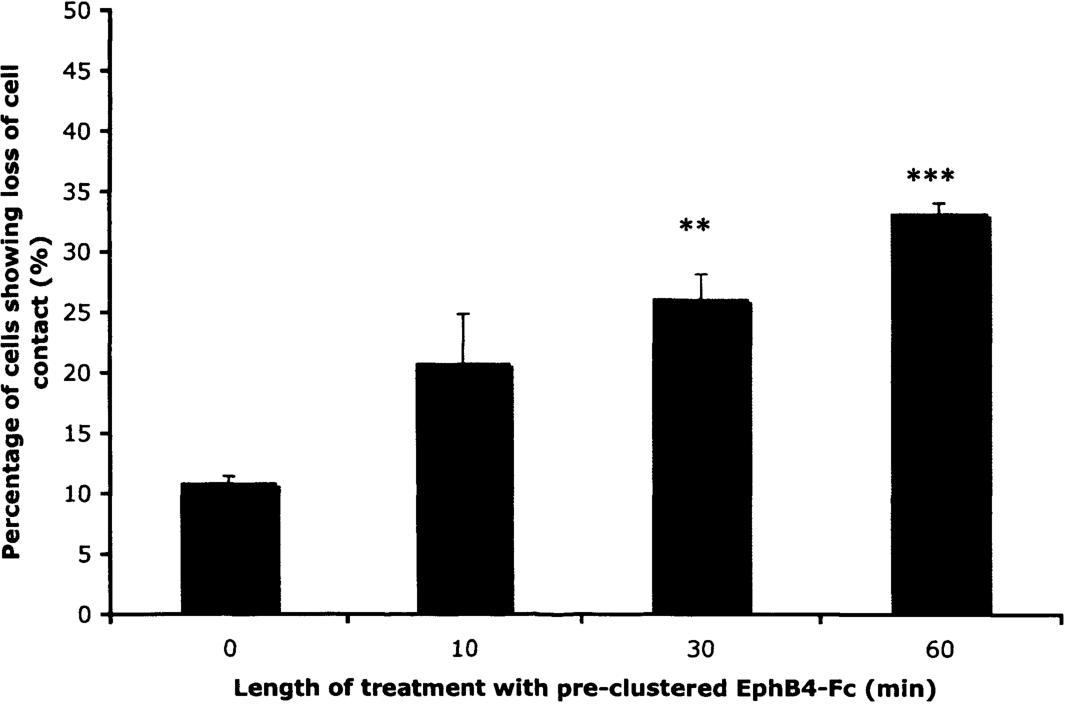 PDF] Regulation of the actin cytoskeleton by ephrin-B signalling