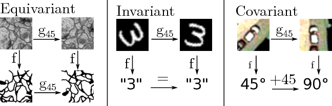Figure 1 for Rotation equivariant vector field networks
