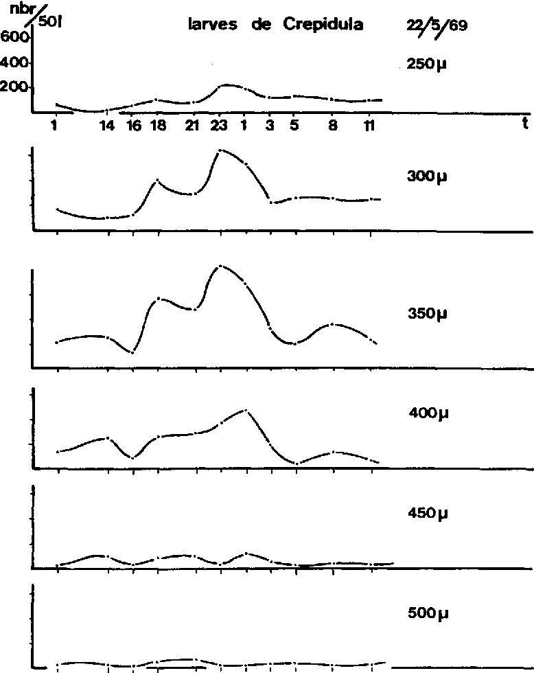Fig. 3. La distribution des tailles des larves de Crepid~la fornicata dans le plancton de surface, au cours de 24 heures.