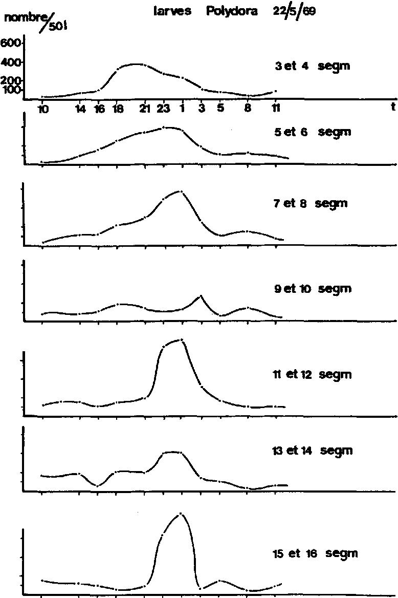 Fig. 4. La distribution des tailles des larves de PoZydoru ~Z~utu dans le plancton de surface au cours de 24 heures.