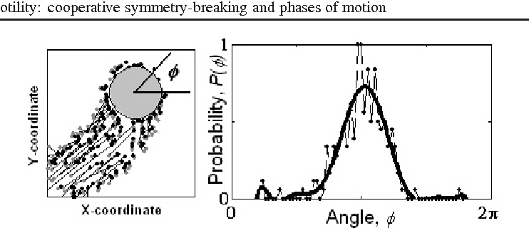 Figure 3. (a) Snapshot of a distribution of actin filaments from the time sequence shown in figure 2(b). (b) Filament density distribution as a function of angle for the frame shown in figure 3(a). Parameter values as in figure 2(b).