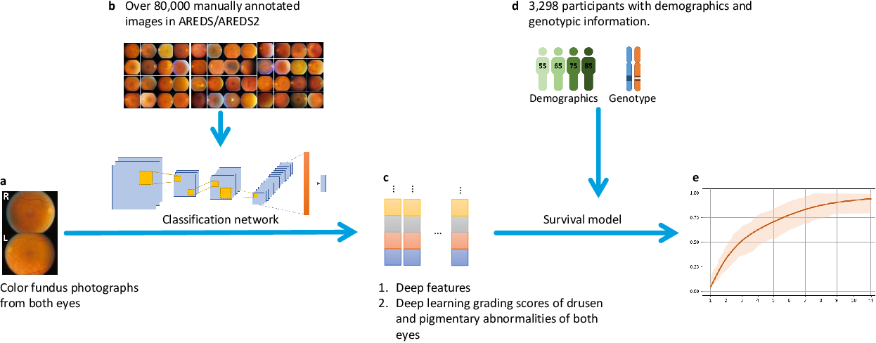 Figure 1 for Predicting risk of late age-related macular degeneration using deep learning