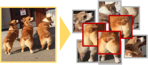 Figure 1 for Knowledge Transfer Based Fine-grained Visual Classification