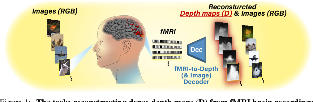 Figure 1 for More than meets the eye: Self-supervised depth reconstruction from brain activity