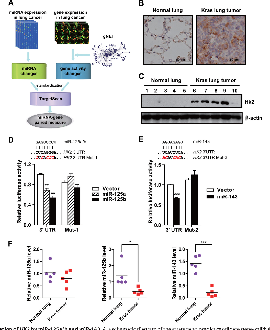 Figure 1 from microrna 143 mir 143 regulates cancer glycolysis via figure 1 ccuart Image collections