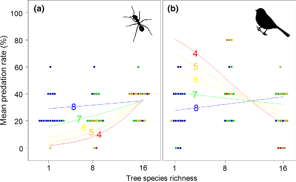 Tree diversity has contrasting effects on predation rates by birds
