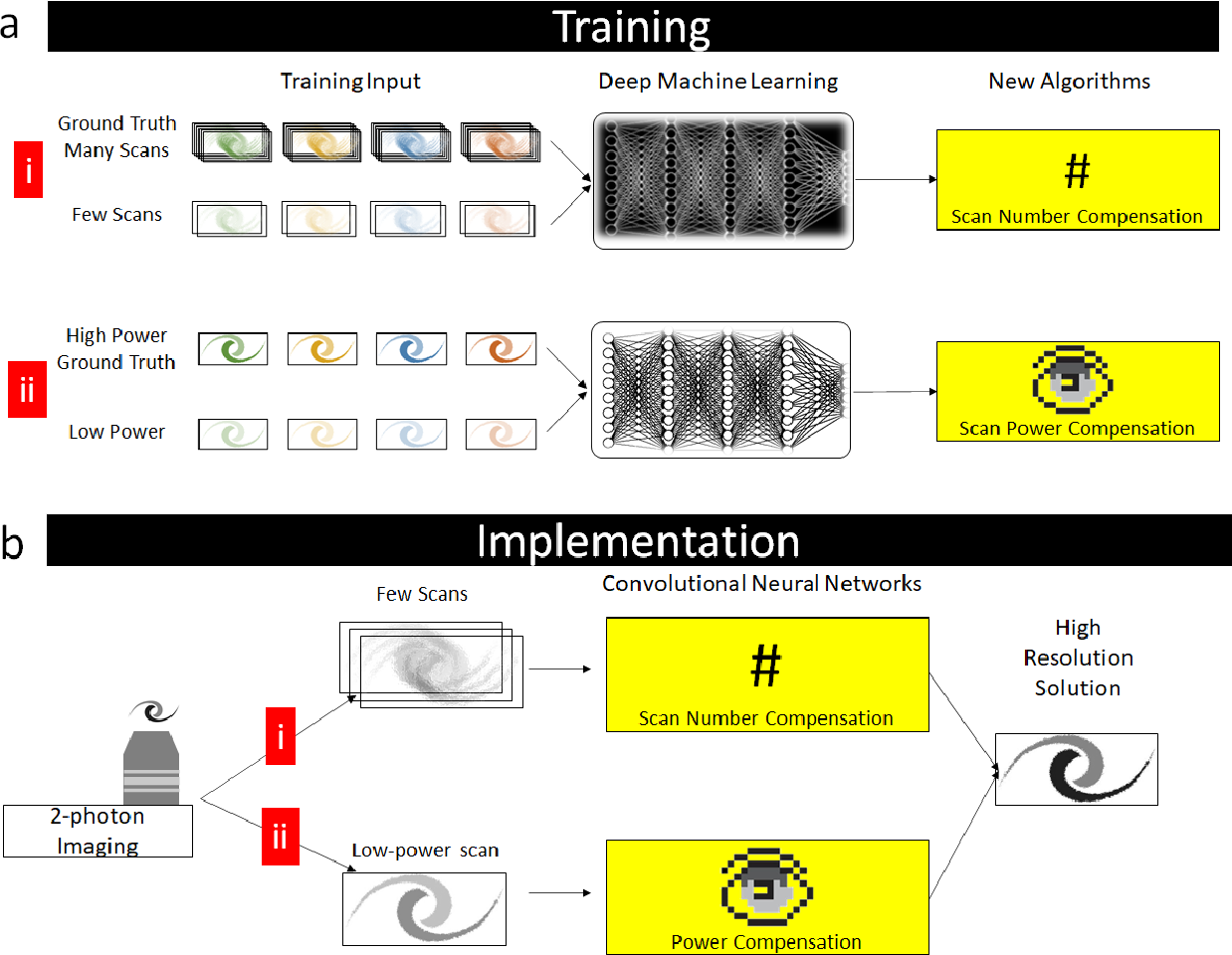 Figure 2 for Deep machine learning-assisted multiphoton microscopy to reduce light exposure and expedite imaging