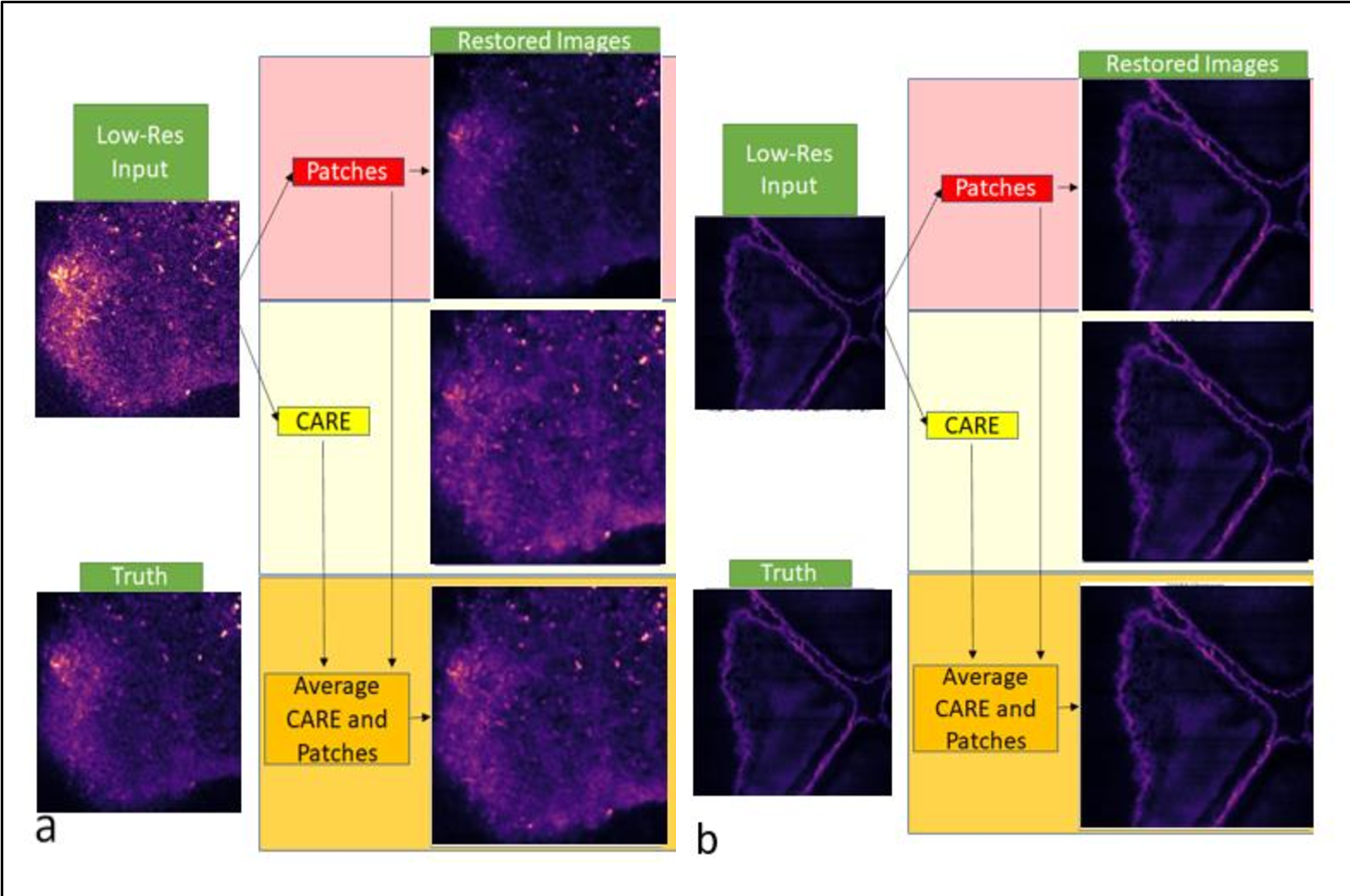 Figure 3 for Deep machine learning-assisted multiphoton microscopy to reduce light exposure and expedite imaging