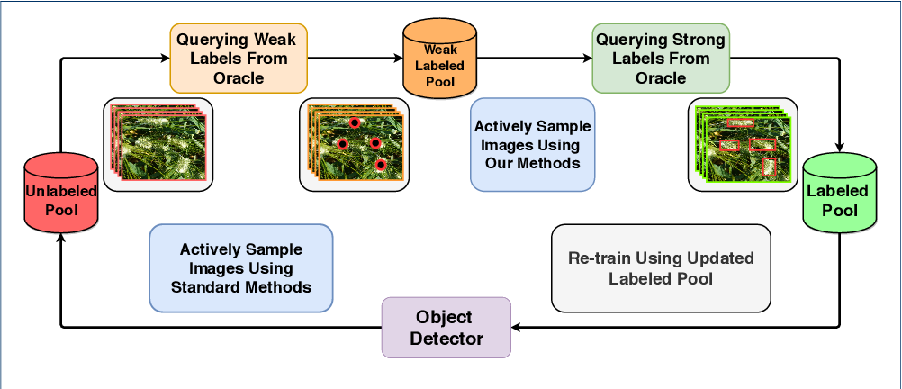 Figure 3 for Active Learning with Weak Supervision for Cost-Effective Panicle Detection in Cereal Crops