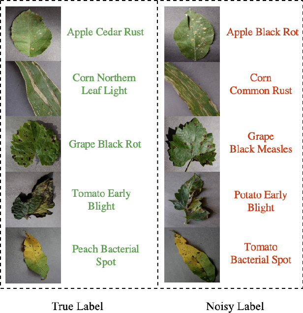 Figure 1 for Rectified Meta-Learning from Noisy Labels for Robust Image-based Plant Disease Diagnosis