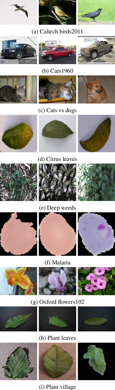 Figure 2 for Fusion of CNNs and statistical indicators to improve image classification
