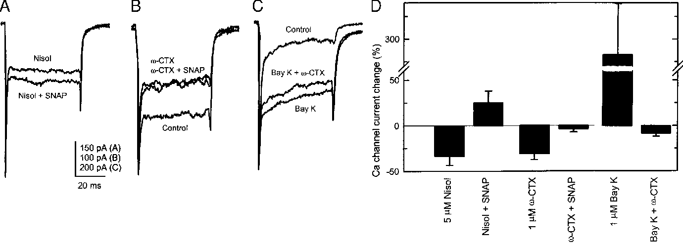 FIG. 4. SNAP enhances v-conotoxin GVIA-sensitive currents. A: Ca channel currents recorded from an isolated ganglion cell at 0 mV in 5 mM nisoldipine, which blocked about 20% of the current, then with 1 mM SNAP added to the nisoldipine. Holding potential was 270 mV. B: current records from a ganglion cell tested at 220 mV in control, 1 mM v-conotoxin GVIA (v-CTX) and v-conotoxin GVIA plus 1 mM SNAP. C: Ca channel currents recorded from an isolated ganglion cell at 220 mV in 1 mM Bay K 8644 and 1 mM Bay K 8644 plus 5 mM v-conotoxin GVIA showing that conotoxin blocks only Bay K insensitive current. D: summary of Ca channel current changes in the presence of channel blockers, SNAP and Bay K 8644.