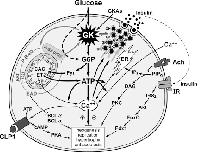 Figure 18 From Research And Development Of Glucokinase Activators