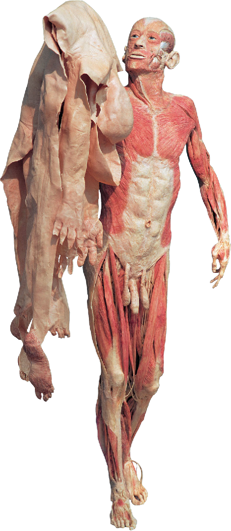 Figure 4 from Authenticity in Anatomy Art. - Semantic Scholar