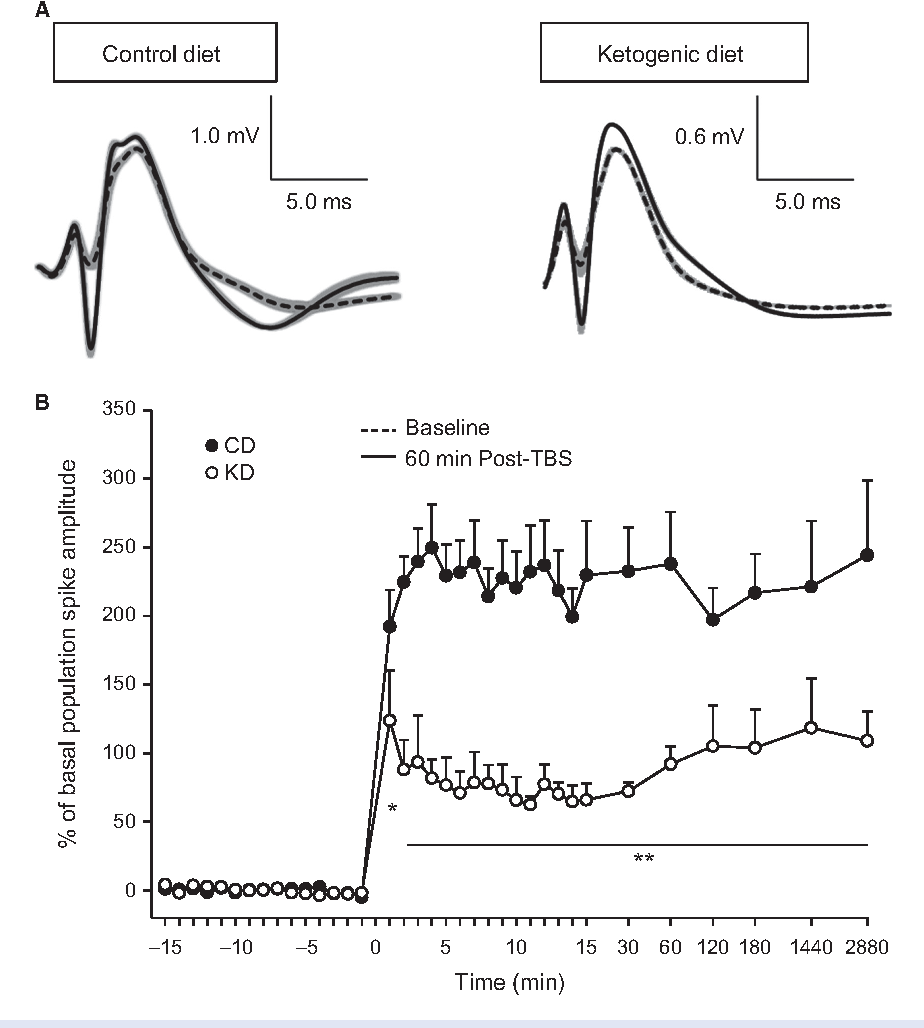 Figure 3. Long-term plasticity in CD-fed and KD-fed animals. (A) Representative examples of field postsynaptic potentials and superimposed population spikes recorded during quiet waking. Traces from baseline (dashed) and 60 min after (solid) h-burst stimulation to induce LTP in rats fed the CD or KD. Baseline stimulation was calibrated to produce 50% of maximal population spike amplitude, and, using this same stimulation intensity, robust potentiation was produced by h-burst stimulation. Traces are averages of five single traces; standard errors are indicated in gray. (B) h-burst stimulation induced long-term plasticity over 48 h in CD-fed and KD-fed animals. Measurements were taken once every minute 15 min before and after induction (minute 0), and at decreasing frequency as time progressed and up to and including 48 h. There was a significant effect of dietary treatment in the amplitude of potentiation which remained until the last recording timepoint. Diet F(1,803) = 9.1, P = 0.006; Diet-x-Time F(35,803) = 6.6, P < 0.001. *P < 0.05, **P < 0.002 CD vs. KD.