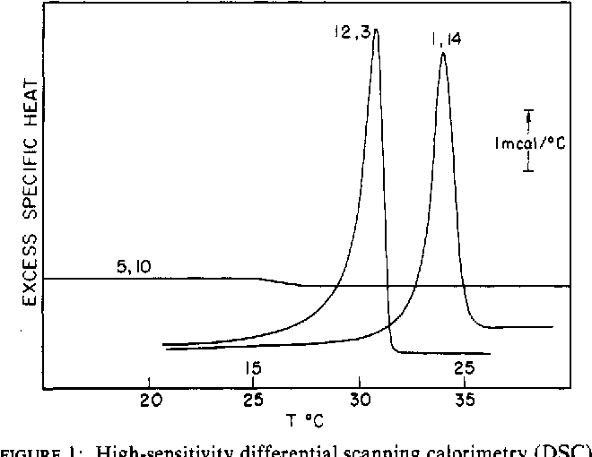 FIGURE 1 : High-sensitivity differential scanning calorimetry (DSC) shows sharp phase transitions for two of three spin-label phosphatidylcholines. From top to bottom, the samples and the weight of lipid used for the measurement are the following: l-palm-2-( 1,14)PC, 1.16 mg; l-palm-2-(5,10)PC, 1.983 mg; l-palm-2-( 12,3)PC, 1.860 mg.