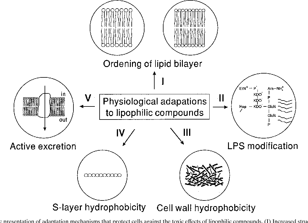 Figure 4 From Hydrocarbons Mechanisms Of Membrane Toxicity Of