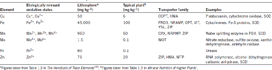 Phytoremediation Of Soil Contaminated With Petroleum Hydrocarbons
