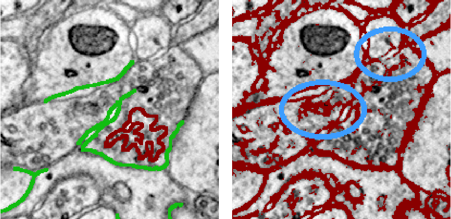 Figure 3 for Large-Scale Automatic Reconstruction of Neuronal Processes from Electron Microscopy Images