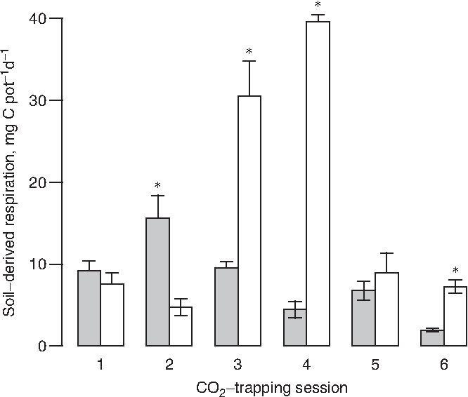 Fig. 3. Mineralization of soil organic C in pots planted with cottonwood (open columns) and unplanted controls (filled columns), 1 SE. Asterisks denote treatment groups that were significantly larger (t-test, po0:05) for each trapping session.