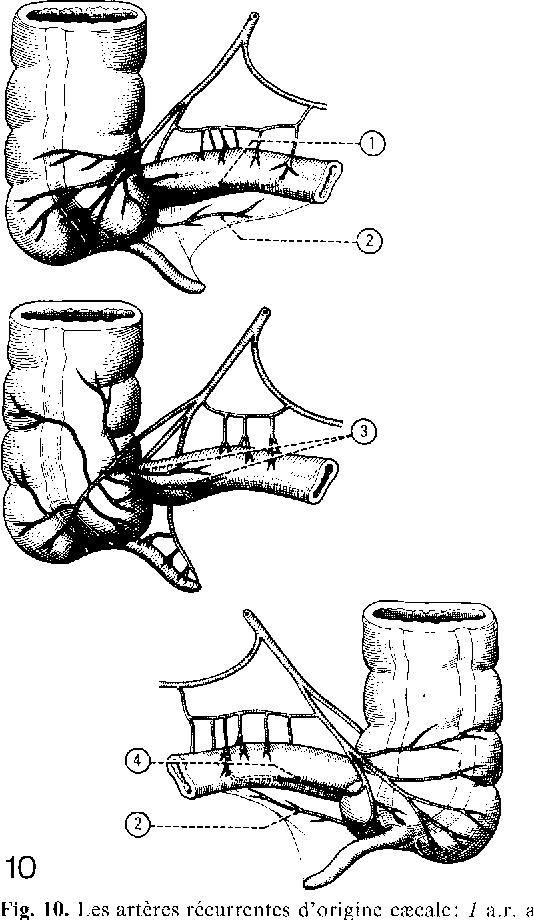 Figure 10 From Les Artres De Lilon Terminal
