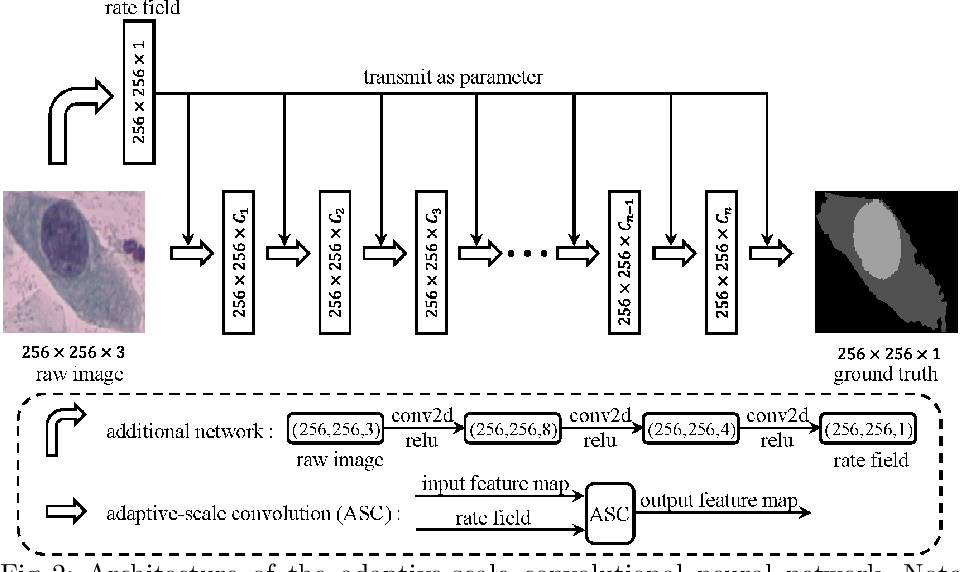 Figure 2 for ASCNet: Adaptive-Scale Convolutional Neural Networks for Multi-Scale Feature Learning