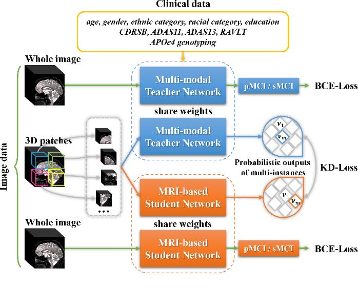 Figure 1 for MRI-based Alzheimer's disease prediction via distilling the knowledge in multi-modal data