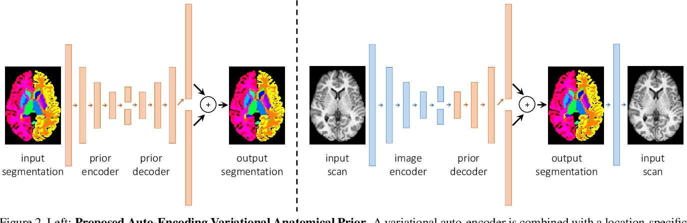 Figure 2 for Anatomical Priors in Convolutional Networks for Unsupervised Biomedical Segmentation