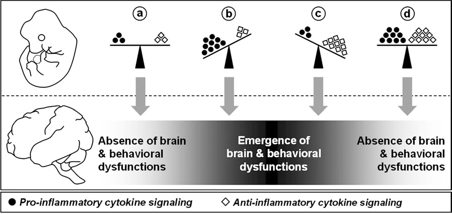 Disrupted Immunity In Fetal Brain Is >> Figure 1 From A Review Of The Fetal Brain Cytokine Imbalance